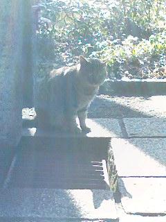皇居に棲むネコ